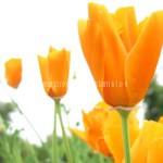 květinové vůně promo vonné visačky